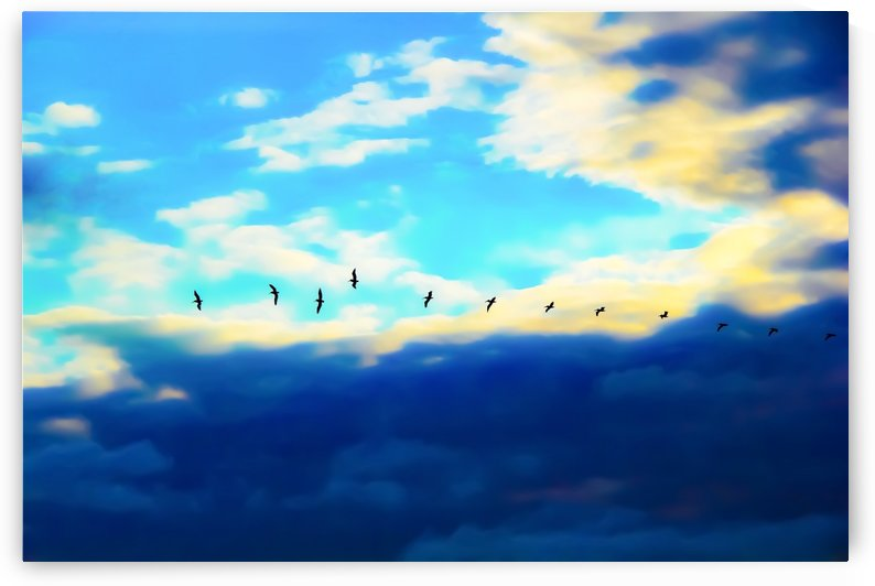 birds flying over with blue cloudy sky by TimmyLA