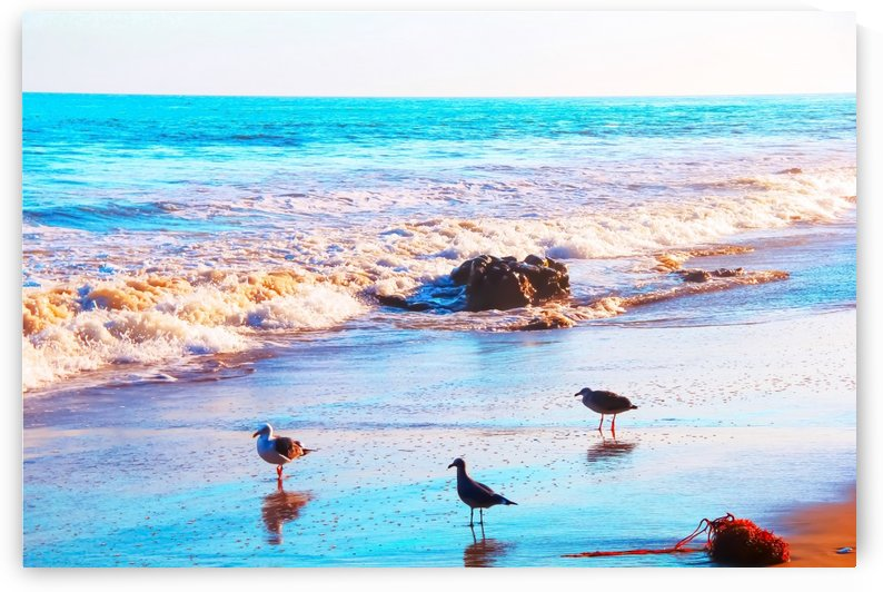 seagull bird on the sandy beach with blue wave water in summer by TimmyLA