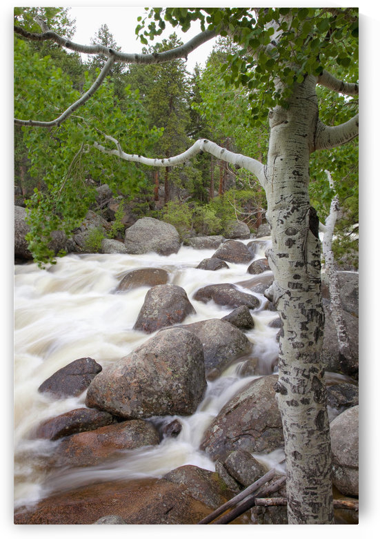 Colorado, Rocky Mountains, A raging river with lush foliage. by PacificStock