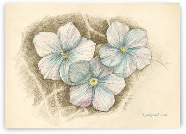 Linum Narbonense by Georgina Vincent