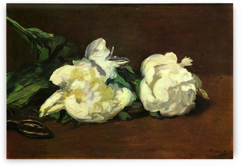 Still life, White Peony by Manet by Manet