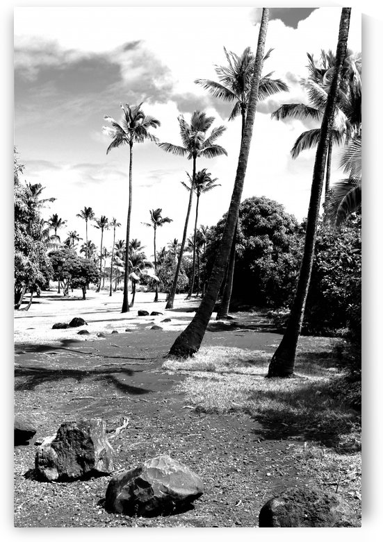 palm tree with cloudy sky in black and white by TimmyLA