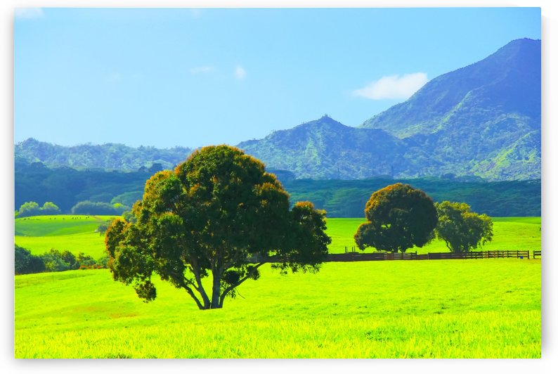 green tree in the green field with green mountain and blue sky background by TimmyLA