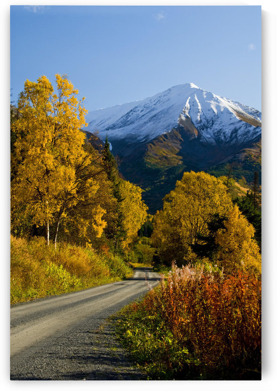 Fall Colors And Snowcapped Peaks Along The Palmer Creek Road Near Hope In The Chugach National Forest On The Kenai Peninsula Of Southcentral Alaska. by PacificStock