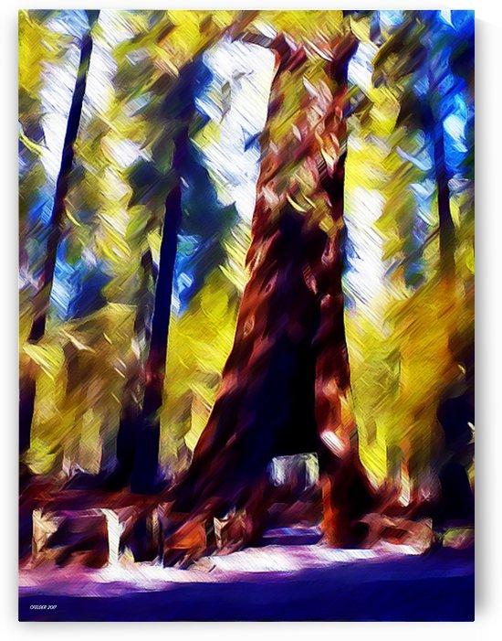 Gefallener Baum by Christoph Felder