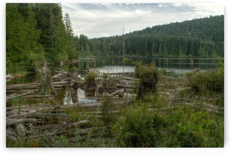 Westwood Lake  by Naturally Scenic Images