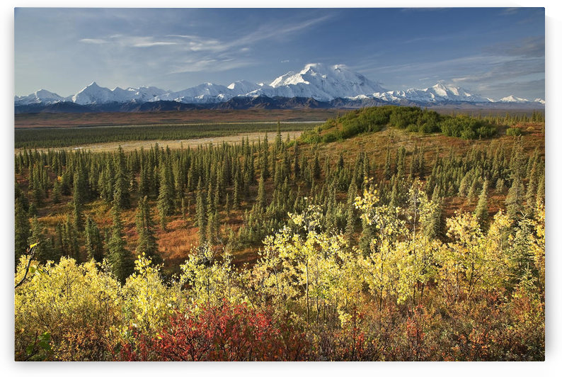 Scenic View Of Mt. Mckinley And The Alaska Range With Taiga And Fall Colors In The Foreground Near Wonder Lake In Denali National Park, Alaska by PacificStock