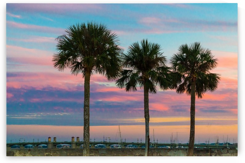 Palm Trees & Sunsets  by Melody Rossi