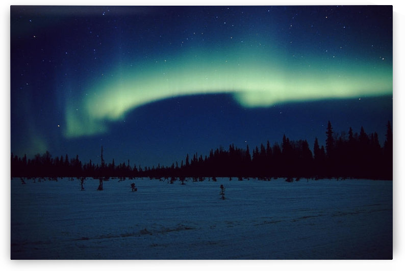Northern Lights Over Black Spruce Forest During Winter In Southcentral Alaska by PacificStock