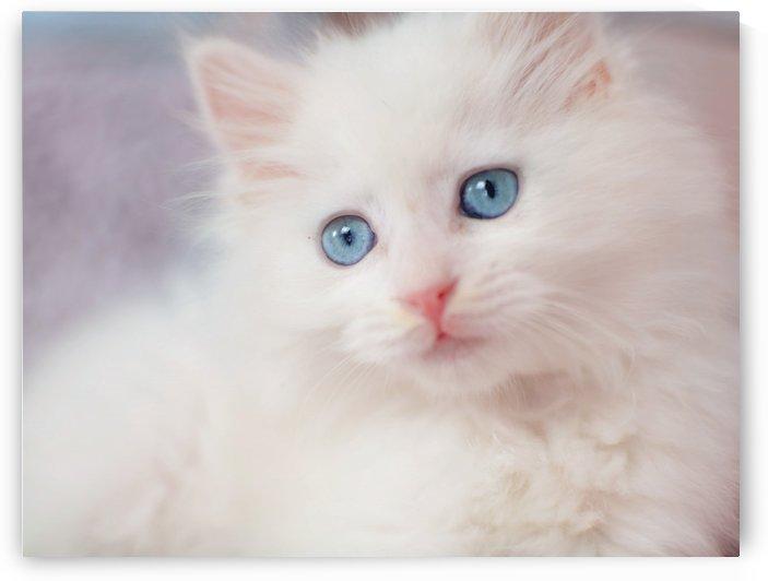 cute kitty by MENG LU