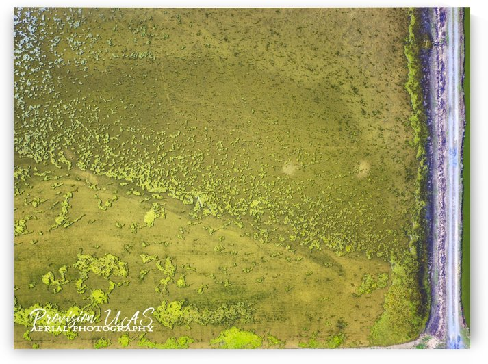 Fish Pond Algae by Provision UAS