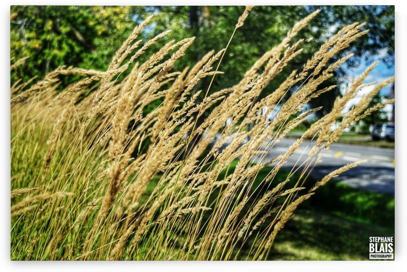Summer Breeze by BLAIS Photo