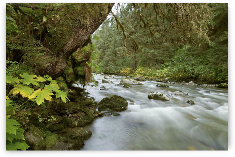 Small River Flowing Through The Old Growth Forest In Tongass National Forest, Southeast, Alaska by PacificStock