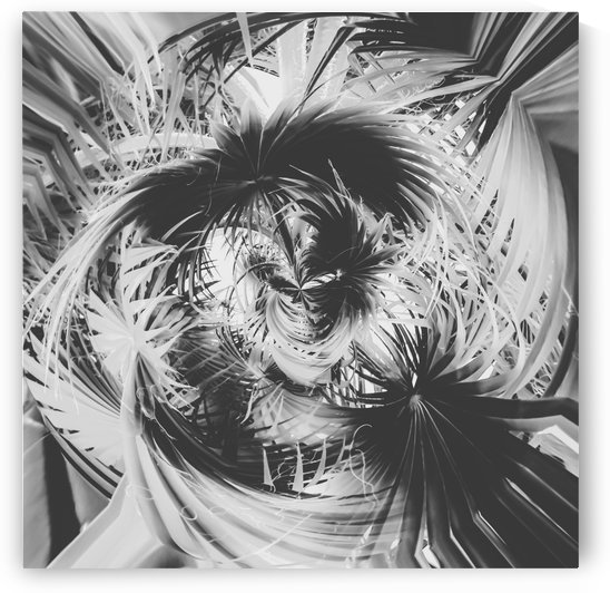 spiral palm leaves abstract background in black and white by TimmyLA