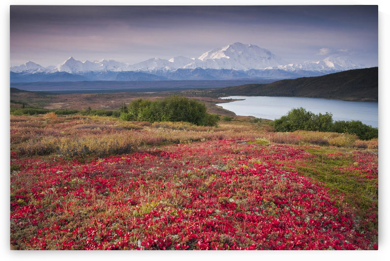Early Morning View Of Mt. Mckinley And Wonder Lake During Autumn, Denali National Park, Interior Alaska by PacificStock