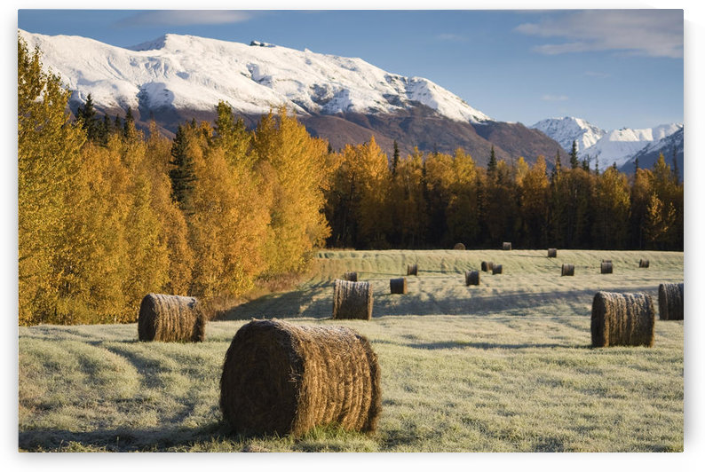 Sunrise Over A Field On Farmer's Loop Road Just Outside Of Palmer, Southcentral Alaska, Fall by PacificStock