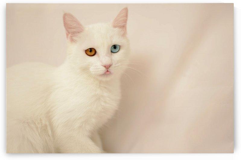 cute eyes 3 by MENG LU