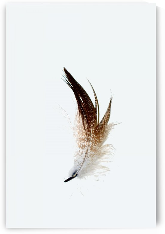 Feather 1 by Richard D. Jungst