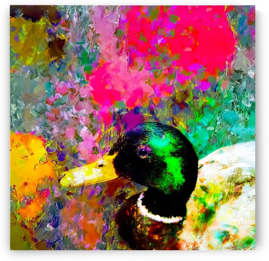 mallard duck with pink green brown purple yellow painting abstract background by TimmyLA