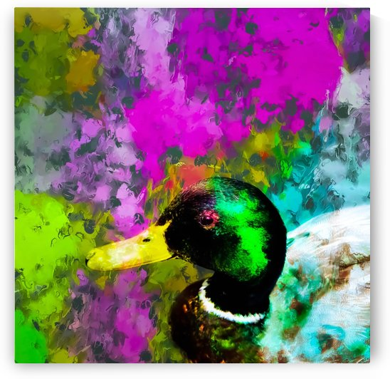 mallard duck with pink blue green yellow painting abstract background by TimmyLA