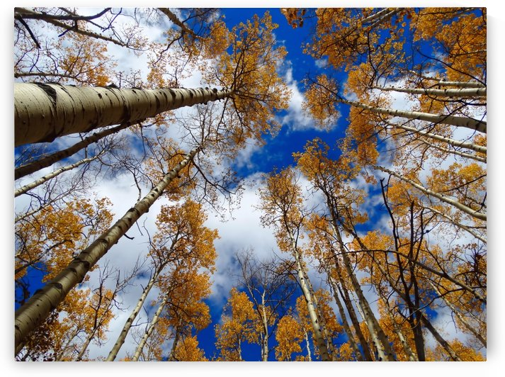 Aspen sky by Richard D. Jungst