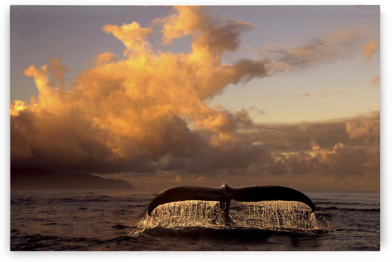 Humpback Whale Tail In Water Southeast Ak Digital Original Summer Scenic Composite by PacificStock