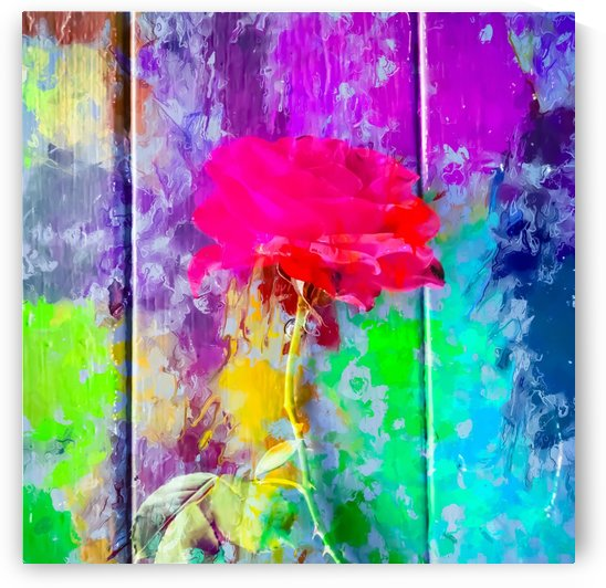 red rose with pink purple blue green yellow painting abstract background by TimmyLA