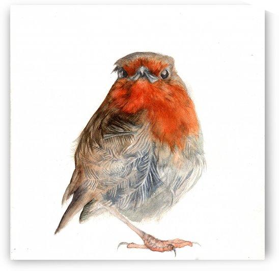 Robin  by Watercolour Soul