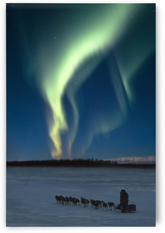 Scenic View Of Musher With Northern Lights Overhead Alaska, Winter. Composite by PacificStock