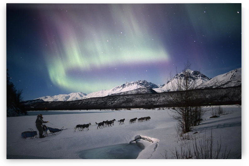 Scenic View Of Dog Team Mushing On The Matanuska River With Northern Lights Overhead, Matanuska Susitna Valley, Southcentral Alaska, Winter. Composite by PacificStock