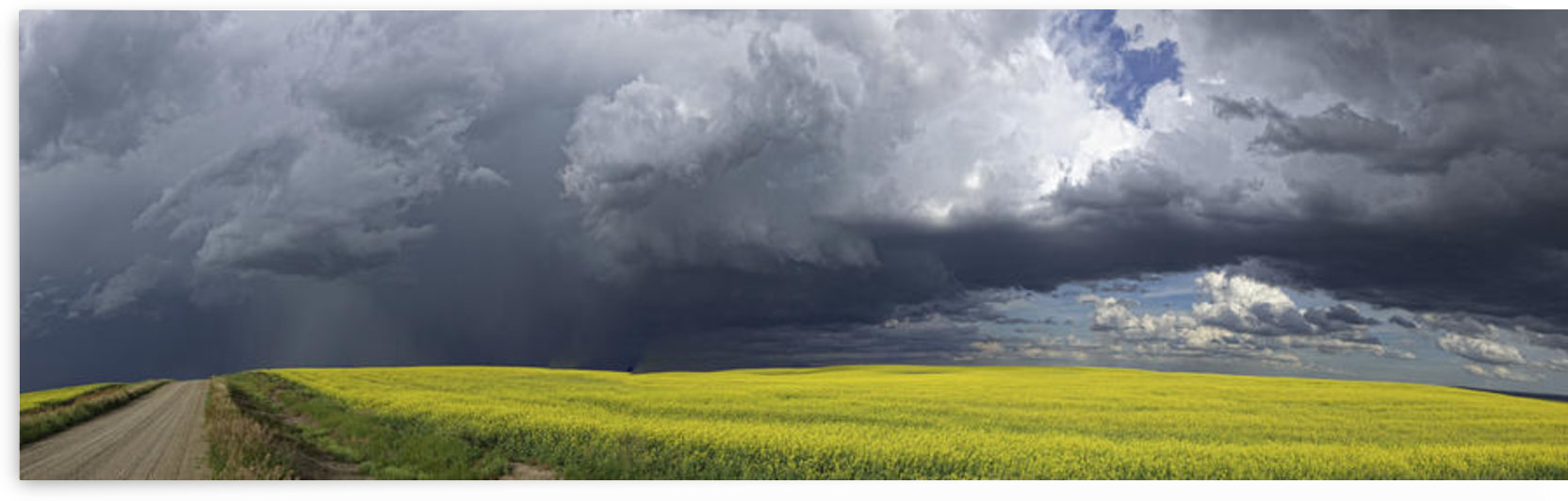 Panoramic of storm clouds gather over a sunlit canola field and country road; Alberta, Canada by PacificStock