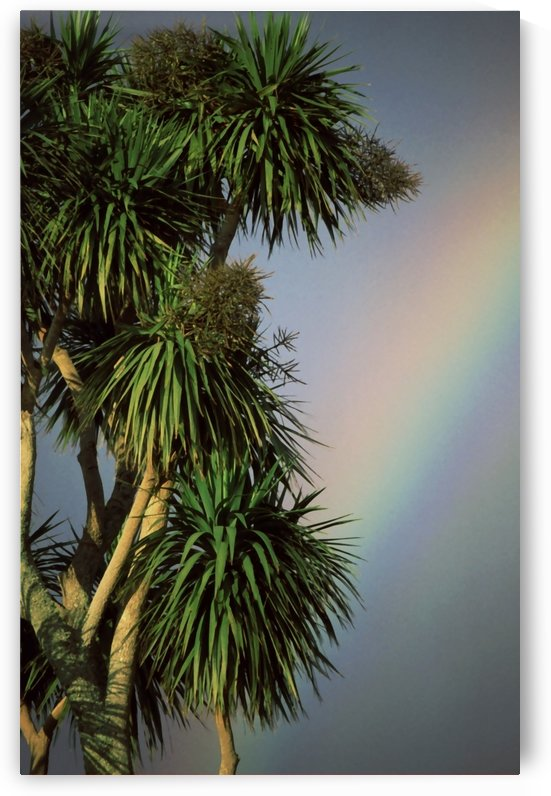 Tropical Rainbow by Greene Safaris Productions