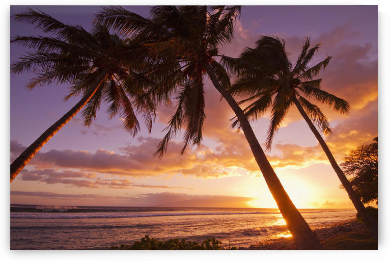 Palm trees at sunset; Olowalu, Maui, Hawaii, United States of America by PacificStock