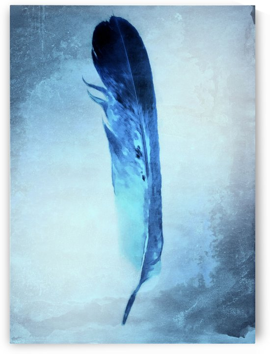 Blue Feather by Illuminary Artworks