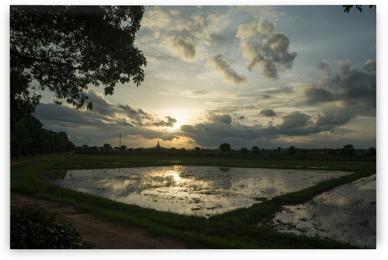 rice field in Sukhothai in thailand in sunset by Babett-s Bildergalerie