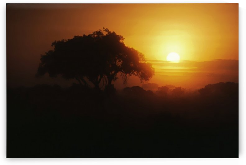 Sunset on the Serengeti by Greene Safaris Productions