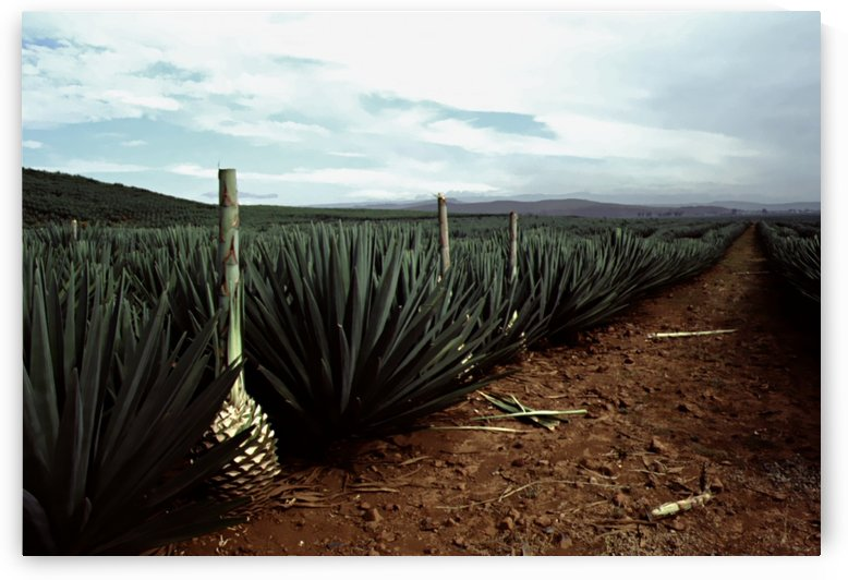 Stormy Tequila by Greene Safaris Productions