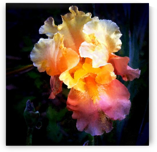 Iris Gold Peach by Mykel Ankyn