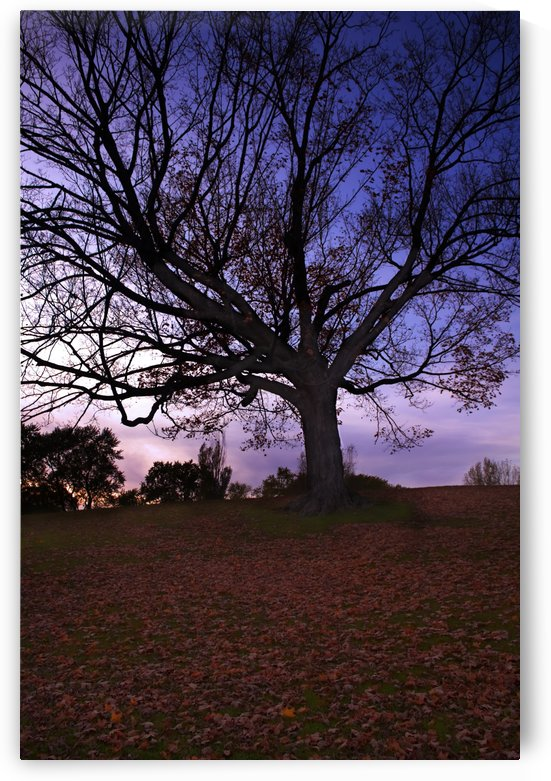 tree Sunset in fall by Quinton Smith