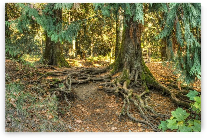 Roots  by Naturally Scenic Images