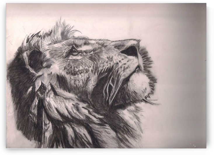 Lion of judah by Christabel