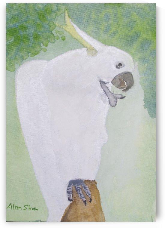 Sulphur Crested Cockatoo. by Alan Skau