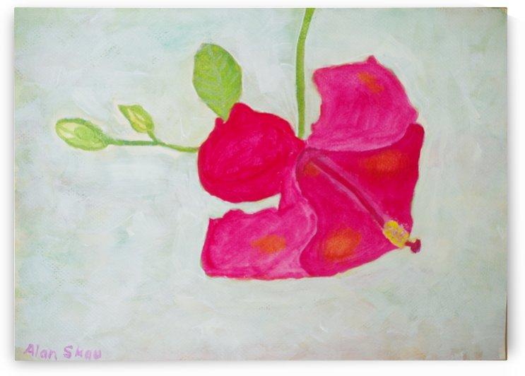 Red hibiscus flower. by Alan Skau