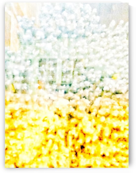 BURST - YELLOW & WHITE by David Darcy