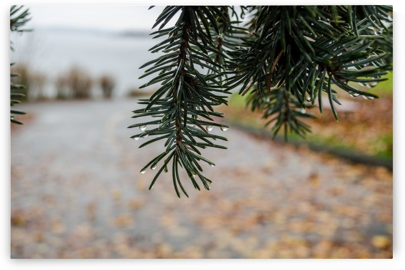 Raindrop on Douglas Fir by Naturally Scenic Images