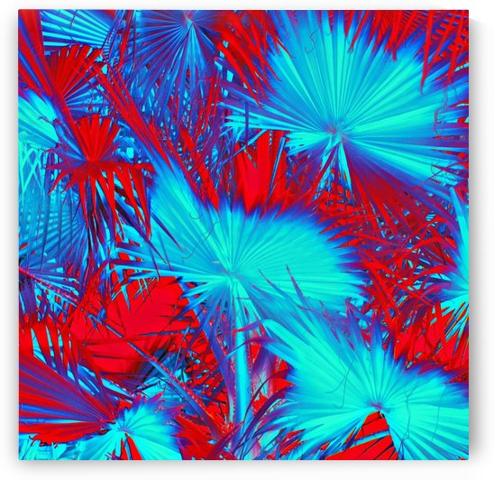 closeup palm leaf texture abstract background in blue and red by TimmyLA