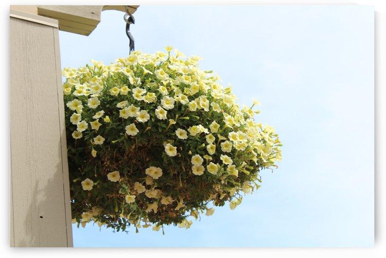 Flower in South Dakota by Valriv