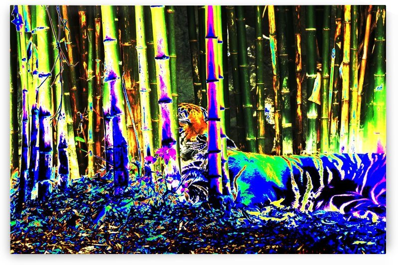 Tiger in a bamboo grove. by Alan Skau