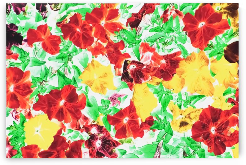red flower and yellow flower with green leaf abstract background by TimmyLA