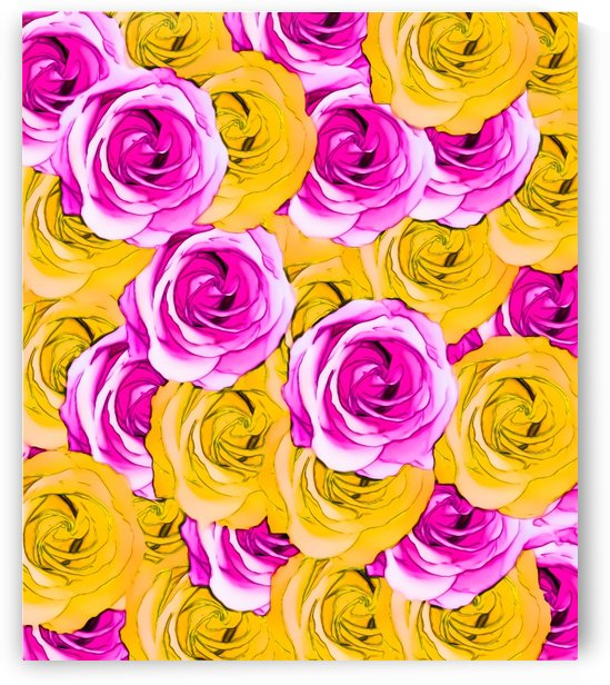 pink rose and yellow rose pattern abstract background by TimmyLA